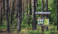 """EBPO prašoma įvertinti įvedinėjamą """"tiesioginį politinį valdymą"""" Valstybinių miškų urėdijoje"""