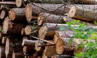 Medienos perdirbėjai ir eksportuotojai palaiko Vyriausybės reformas