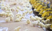 """""""KG Group"""" paukštienos gamybos apimtis augins 50%"""