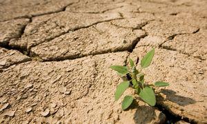 Dėl sausros šalyje skelbiama ekstremali situacija