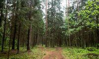 Siūlymai apmokestinti miško savininkus dygsta kaip grybai po lietaus