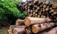 Vyriausybė skuba įtvirtinti šiltnamio sąlygas medienos perdirbėjams