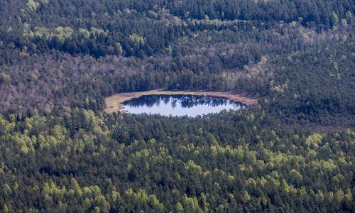 Seimasapribojo investicijas į mišką