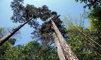 Valstiečiai imasi miškų