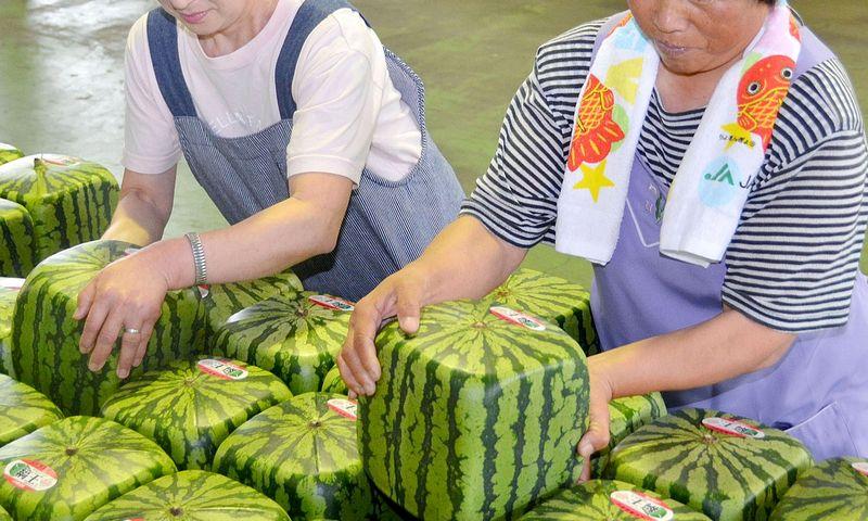 """Kai ūkiai maži, konkuruoti labiausiai apsimoka išskirtine produkcija. APF/""""Scanpix"""" nuotr."""