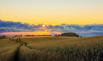 Lietuvoje registruoti perversmą augalų apsaugoje žadantys BASF fungicidai Revytrex® ir Revystar® XL
