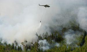 Miškus Sibire padega, nes naudinga juos iškirsti vėliau