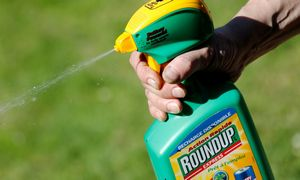 A. Palionis – prieš javų purškimą chemikalais su glifosatu