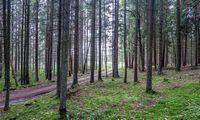Seimas iš naujo svarstys pataisas dėl miško žemės pirkimo