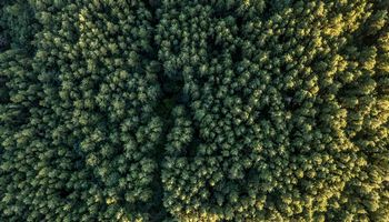 Privačių miškų savininkai po Seimo sprendimo kreipiasi į Europos Komisiją