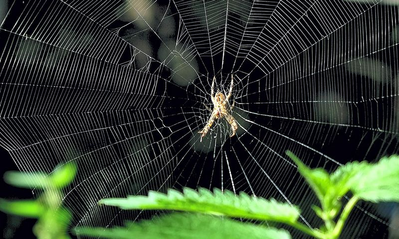 """Prasidėjęs tyrimas yra šansas suardyti tarptautinius įmonių voratinklius, o rinkos lyderiams paneigti įtarimus, kad skelbimų rinkoje yra piktnaudžiaujama. Patriko Stollarzo (AFP / """"Scanpix"""") nuotr."""