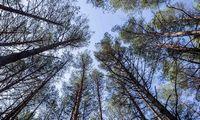 Miškininkai į mišką nuveš nemokamai