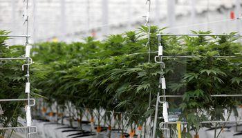 """""""Aurora Cannabis"""" naujas taikinys – JAV rinka"""