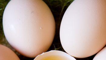 Kiaušiniai – valgyti ar nevalgyti