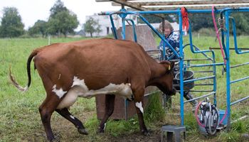 Didėja susietoji parama už pienines karves