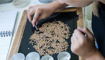 """Nuostolį 90% mažinusi """"Baltic Mill"""" žengia į naują produktų segmentą"""