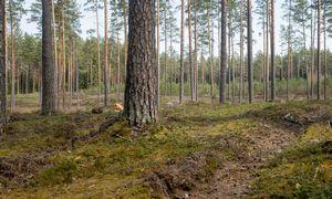 Valstybinė miškų urėdija netrukus turės naują vadovą: laukia nemenki iššūkiai