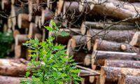 """Didžiausi miško valdytojai – IKEA, Suomijos įmonė ir """"Dzūkijos miškas"""""""