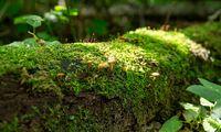 Naujasis miškų urėdas – Vyriausybės narių medžioklės partneris