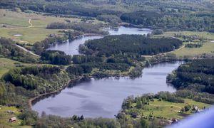 Stambūs investuotojai, kol galima, masiškai supirkinėja miško valdas
