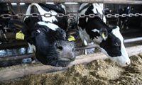 Po gaisro pieno produktai išimami iš prekybos norint apsidrausti