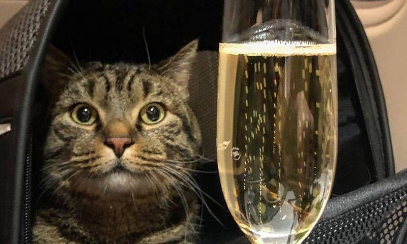 Katinas Viktoras verslo klase skrenda į Vladivostoką. Nuotrauka iš Michailo Galino feisbuko paskyros.