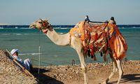 Egiptas tikisi užsienio turistų srautus šiemet sugrįšiant į 2010 m. lygį