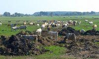 Žemės ūkio emisijos: problemai spręsti pinigų nepakanka