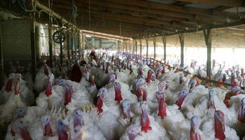 Veiklą nutraukia didžiausias šalyje kalakutų ūkis