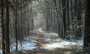 Lietuvos miškuose pozicijas stiprina švedų SEB investuotojai