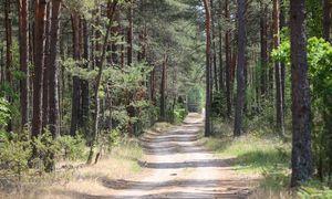 """""""Invaldos INVL"""" miškų fondas pardavė 4.300 ha miškų, skaičiuoja 25% grąžos normą"""
