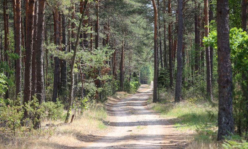 Lietuvos miškas. Vladimiro Ivanovo (VŽ) nuotr.