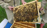 Europa bites gelbės mažindama pesticidų naudojimą