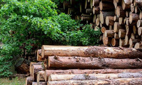 Subliuškus medienos kainų burbului, 2019 m. žaliava pigo 40%