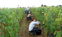 Brangiausio vyno butelis kainavo 30.000 Eur