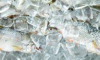 Žuvų augintoja per obligacijas pasiskolino 9,1 mln. Eur, investuotojams žada viešą emisiją