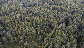 Valdžia investavimo į miškus nenužudė: kuriami nauji fondai, traukiamos investuotojų lėšos