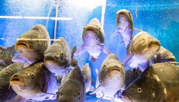 Prekybininkai atsisako gyvų žuvų akvariumų
