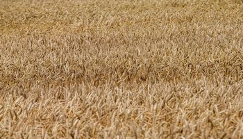 Verslininkui, trims ūkininkams – kaltinimai dėl sukčiavimo, apgaulingo apskaitos tvarkymo