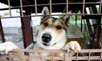 EP stojo į kovą su nelegalia prekyba katėmis ir šunimis