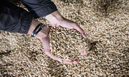 Lietuviškus kviečius leista eksportuoti į Braziliją