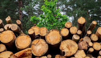Kinija rengiasi uždrausti prekiauti ir naudoti neteisėtai įgytą medieną