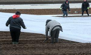 Koronaviruso grėsmės Lietuvos ūkius aplenkia