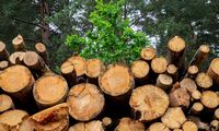 Perdirbėjai dėl karantino nestabdo medienos pirkimų iš VMU