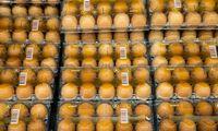 """Kiaušinių kainos: išsiskiria """"Norfa"""" ir""""Lidl"""""""