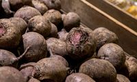 Daržovių augintojai Lietuvoje naikina pernykštį derlių