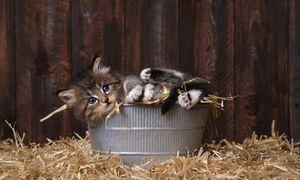 Patarimas NT plėtotojams: užteks rodyti kačiukus ir garuojančią kavą