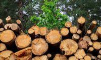 Perdirbėjaikrizės nejaučia: šluoja atpigusią valstybinę medieną