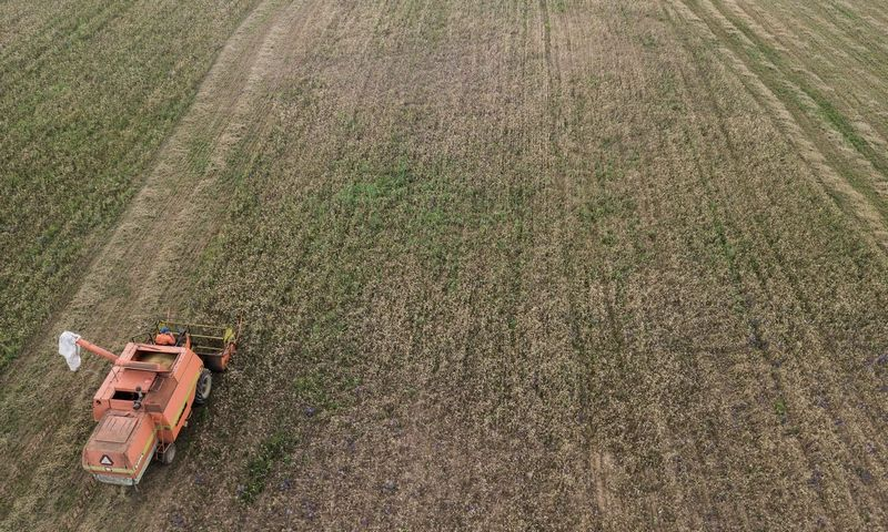 Javų derliaus nuėmimas. Vladimiro Ivanovo (VŽ) nuotr.