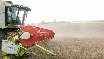 """Pasėlių būklė džiugina – """"Linas Agro Group"""" prognozuoja gausų derlių"""